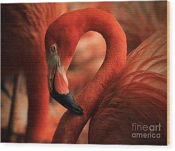 Flamingo Poised Wood Print by Toma Caul