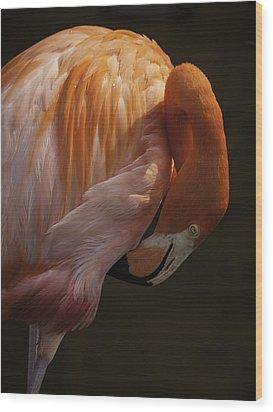 Flamingo Preening Wood Print by Rob Wilson