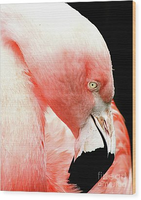 Flamingo . R7927 Wood Print by Wingsdomain Art and Photography