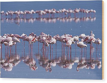 Flamingo Reflection - Lake Nakuru Wood Print by Sandra Bronstein