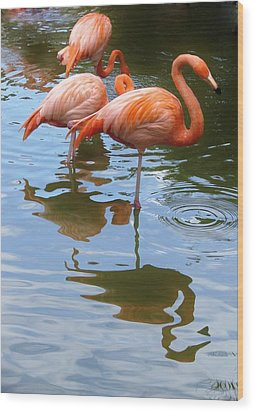 Wood Print featuring the photograph Flamingo Reflections by Margaret Bobb