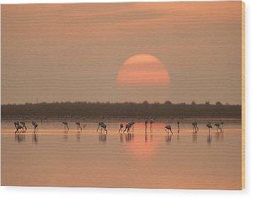 Flamingos At Sunrise Wood Print by Joan Gil Raga