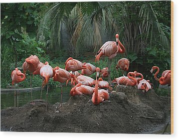 Wood Print featuring the photograph Flamingos by Cathy Harper