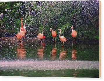 Flamingos II Wood Print by Susanne Van Hulst