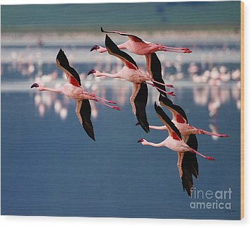 Flamingos In Flight-signed Wood Print