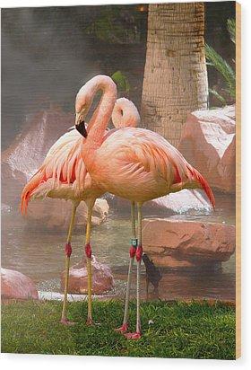 Flamingos Wood Print