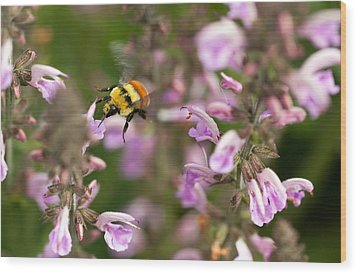 Flight Of The Bumble Bee Wood Print