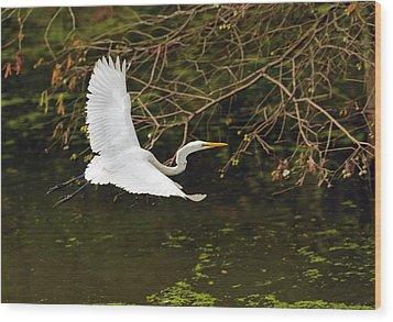 Flight Of The Egret Wood Print
