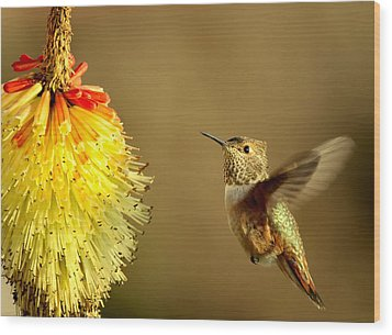 Flight Of The Hummer Wood Print by Mike  Dawson