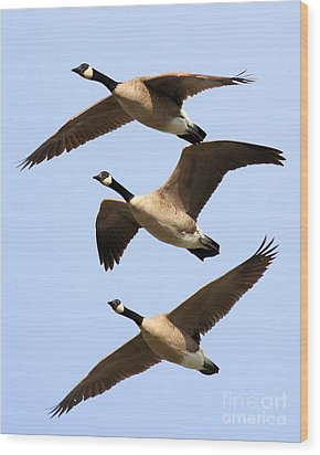 Flight Of Three Geese Wood Print by Wingsdomain Art and Photography