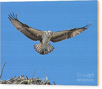 Wood Print featuring the photograph Flight Practice Over The Nest by Debbie Stahre