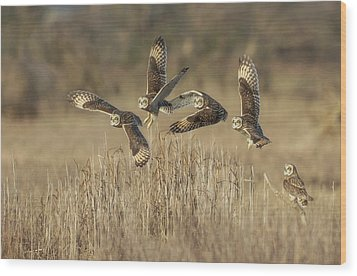 Wood Print featuring the photograph Flight Sequence by Angie Vogel