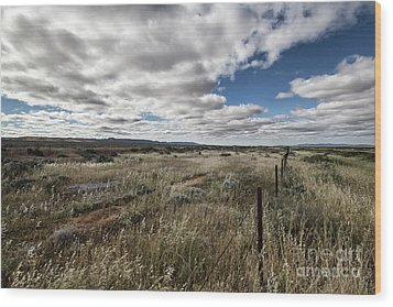 Wood Print featuring the photograph Flinders Ranges Fields V2 by Douglas Barnard