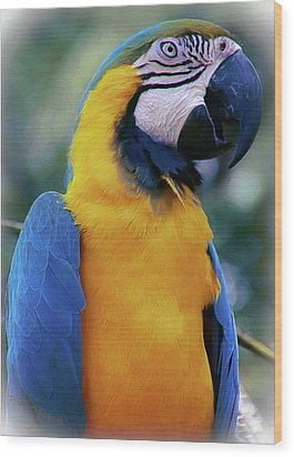 Flirtacious Macaw Wood Print by DigiArt Diaries by Vicky B Fuller