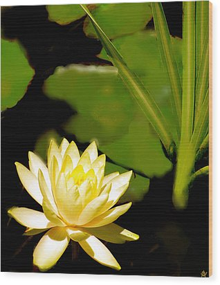 Float Of Elegance  Wood Print
