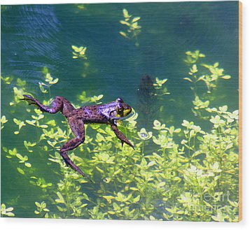 Floating Frog Wood Print by Nick Gustafson