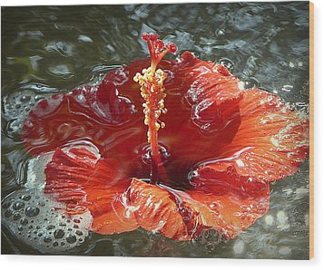 Floating Hibiscus Wood Print by Lori Seaman