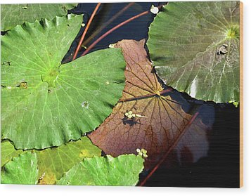 Floating Lily Pads Wood Print