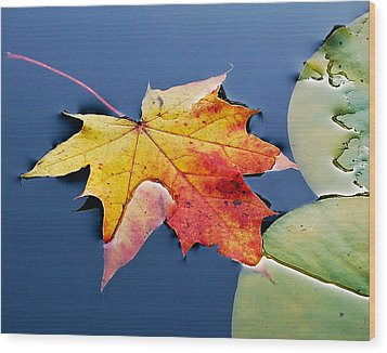 Floating Maple Leaf Wood Print by Marion McCristall