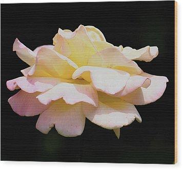 Floating Rose 3894 Wood Print