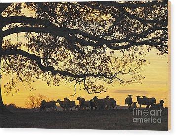 Flock At Sunrise Wood Print by Thomas R Fletcher