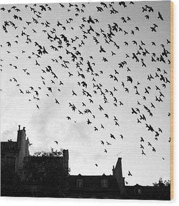 Flock Of Bird Flying Wood Print by Miles Lau