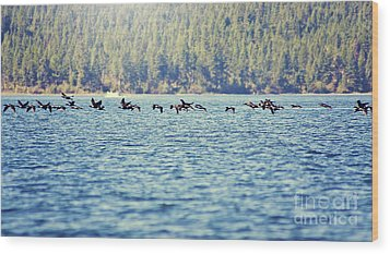 Flock Of Geese Wood Print by Janie Johnson