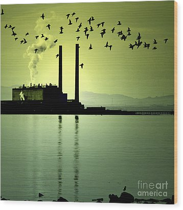 Wood Print featuring the photograph Flock Of Gulls by Craig B
