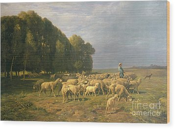 Flock Of Sheep In A Landscape Wood Print