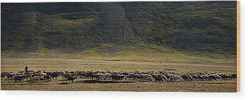 Flock Of Sheep Wood Print by Konstantin Dikovsky