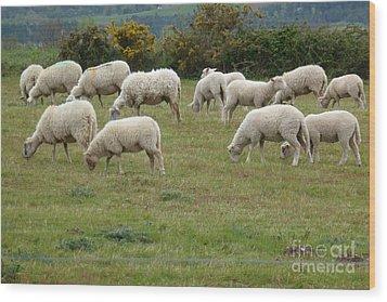 Flock Of Sheeps Wood Print by Jean Bernard Roussilhe