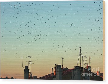 Flock Of Swallows Flying Over Rooftops At Sunset During Fall Wood Print by Sami Sarkis