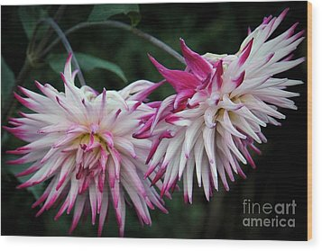 Floral Explosion Wood Print by Patricia Strand