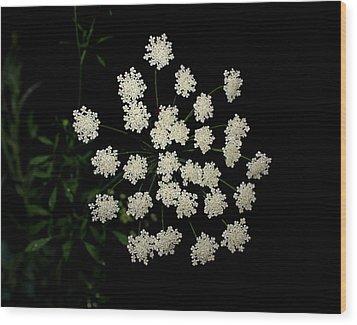 Floral Fireworks Wood Print by Debbie May