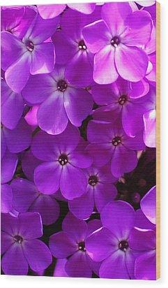 Floral Glory Wood Print by David Lane