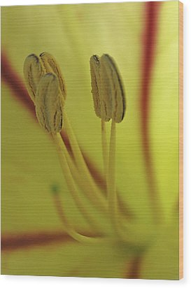 Floral Office Gossip Wood Print by Juergen Roth