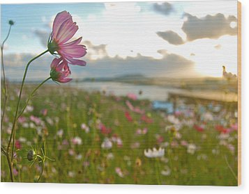 Floral Sunset Wood Print by Yen