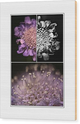 Floralicious  Wood Print by Bonnie Bruno