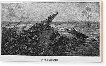 Florida Alligators, 1886 Wood Print by Granger