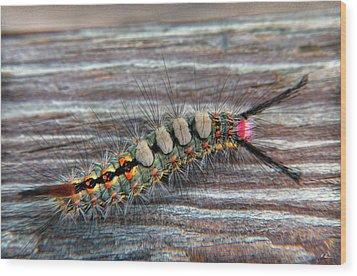Florida Caterpillar Wood Print