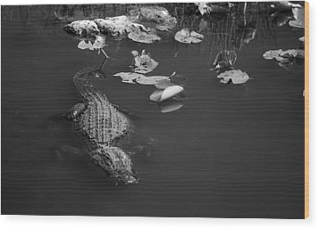 Florida Gator Wood Print by Jason Moynihan