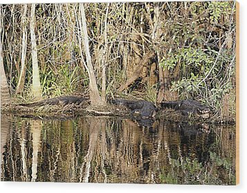 Wood Print featuring the photograph Florida Gators - Everglades Swamp by Jerry Battle