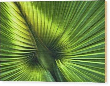 Florida Palm Frond Wood Print by Carolyn Marshall