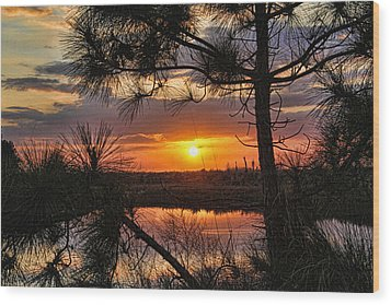 Florida Pine Sunset Wood Print by HH Photography of Florida