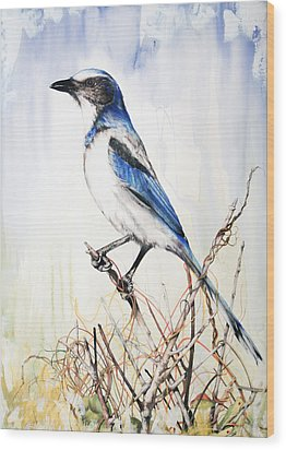 Florida Scrub Jay Wood Print