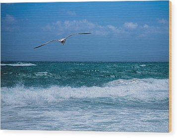 Wood Print featuring the photograph Florida Seagull In Flight by Jason Moynihan