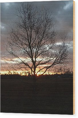 Florida Sunrise And Tree Wood Print by Warren Thompson