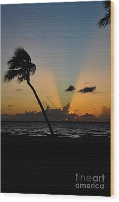 Wood Print featuring the photograph Florida Sunrise Palm by Kelly Wade