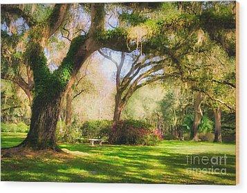 Florida Sunshine Wood Print by Mel Steinhauer