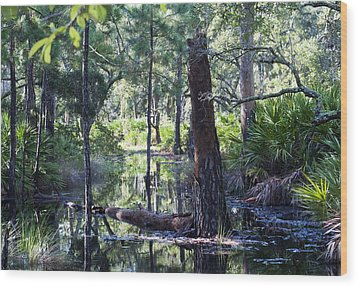 Florida Swamp Wood Print